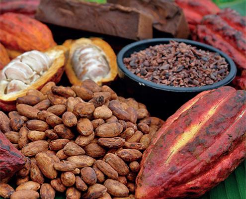cacao-sostenibile